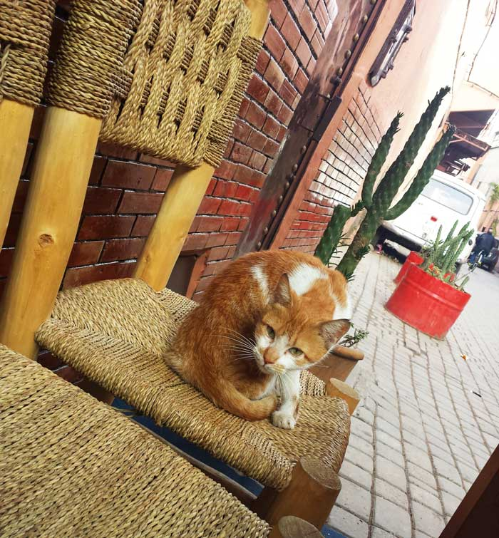 Marrakech Cat